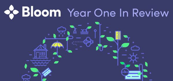 Bloom Year One in Review